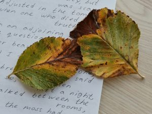Two leaves on a notebook